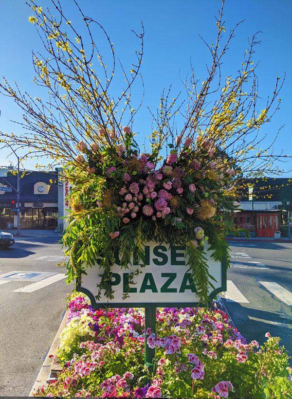 sunset-plaza-flowers-2